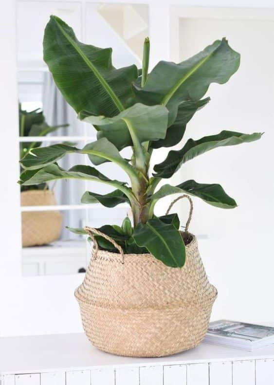 Indoor Plants For Your Home